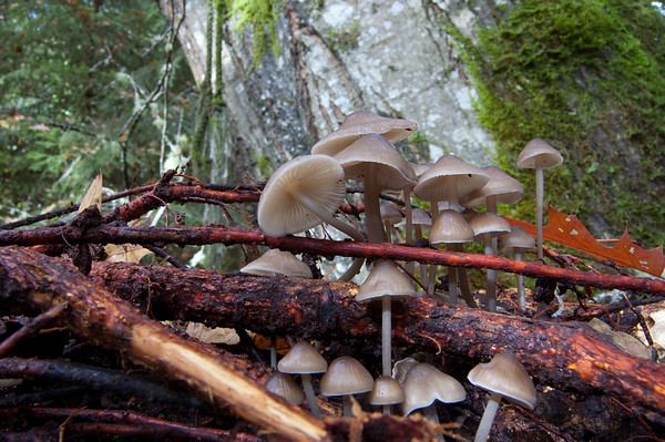 new mushrooms growing on a fallen tree