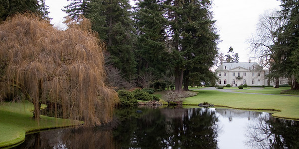 Bloedel mansion and willow in winter