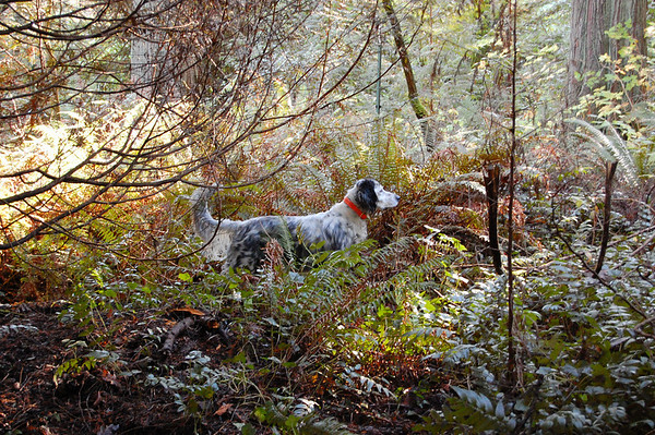 ralph in the woods