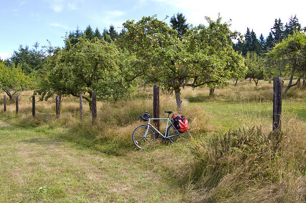 bike and apple trees