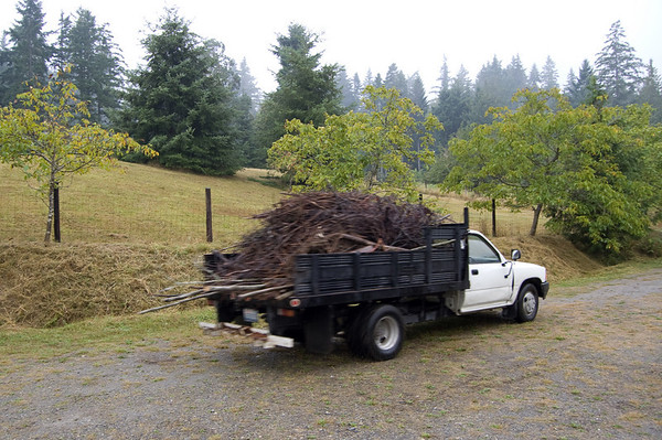 truck filled with brush