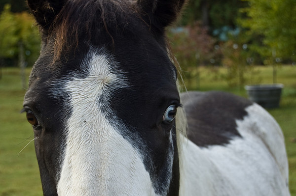 horse with a blue eye